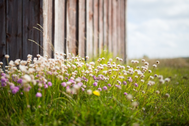 Wildflowers_Jon Ottosson_Stocksnap