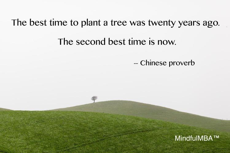 Chinese tree proverb w tag