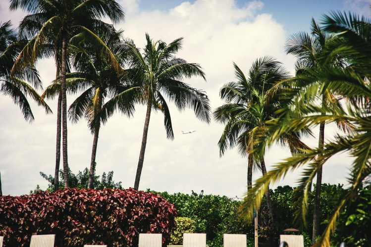Palm trees & plane_Clem Onojeghuo_Stocksnap