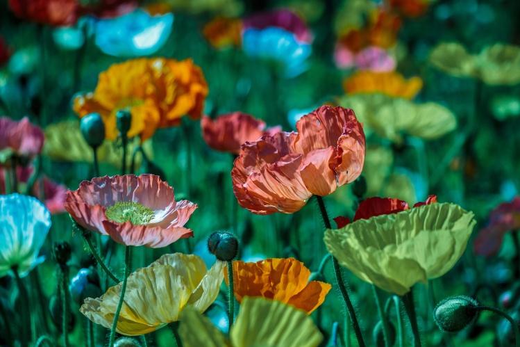 beautiful-hi-def-flowers_lina-angelov_stocksnap